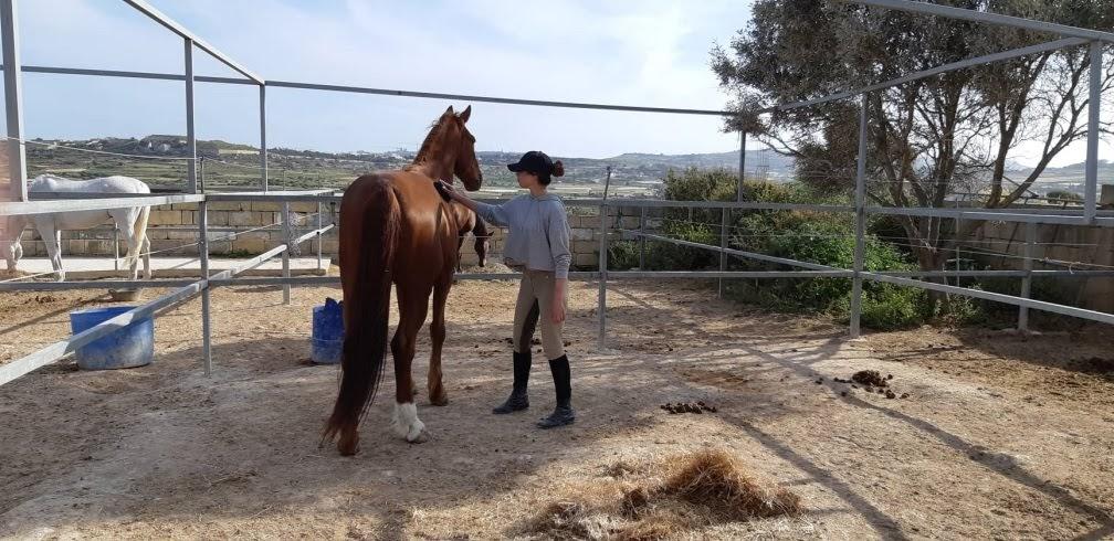 Žirgininkų praktika Maltoje